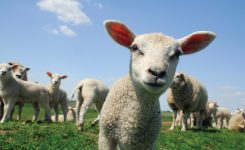 Featured Product: Standard Animal Analysis