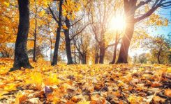 Start of the Fall Season